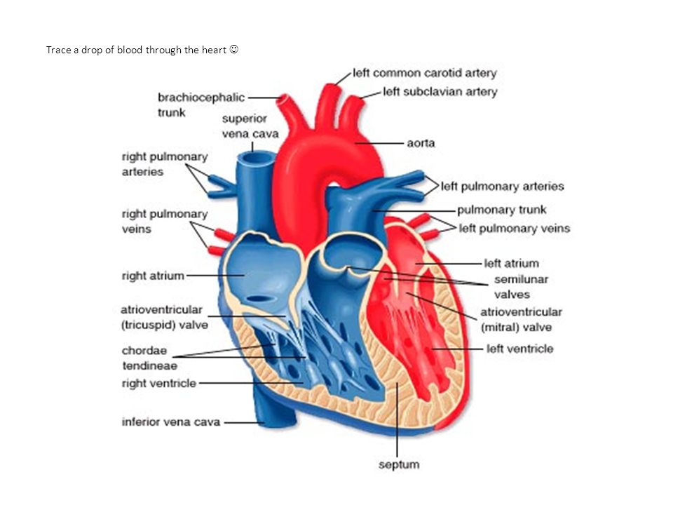 Ventricular Preload Ventricular preload refers to the degree that the myocardial fiber is stretched prior to contraction (end-diastole).