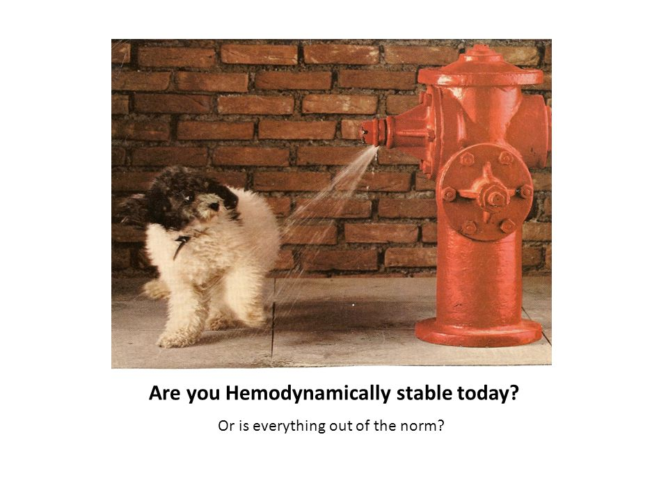 Are you Hemodynamically stable today? Or is everything out of the norm?