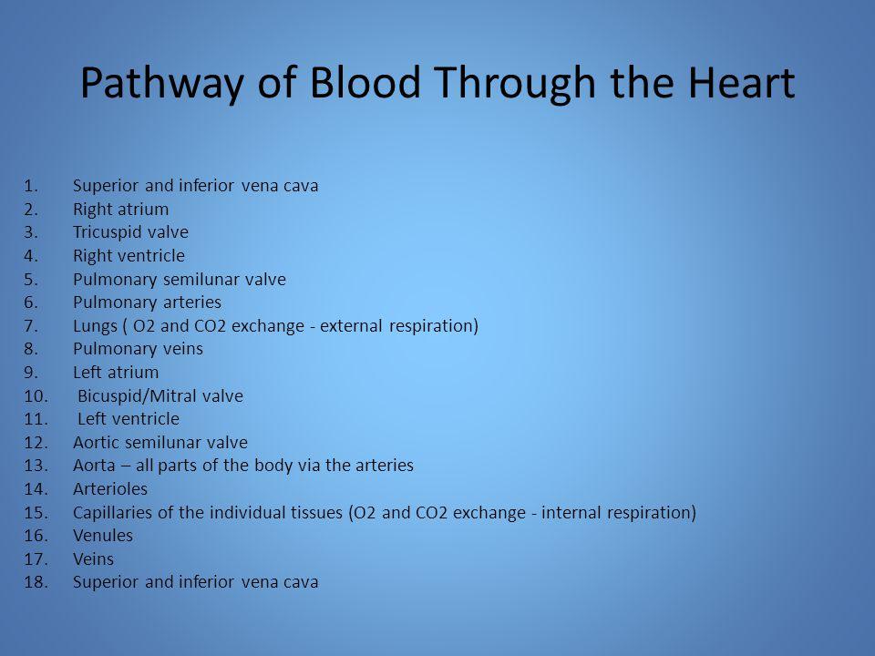Pathway of Blood Through the Heart 1.Superior and inferior vena cava 2.Right atrium 3.Tricuspid valve 4.Right ventricle 5.Pulmonary semilunar valve 6.Pulmonary arteries 7.Lungs ( O2 and CO2 exchange - external respiration) 8.Pulmonary veins 9.Left atrium 10.
