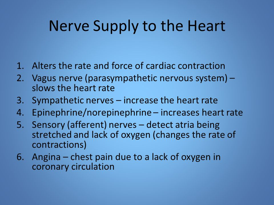 Nerve Supply to the Heart 1.Alters the rate and force of cardiac contraction 2.Vagus nerve (parasympathetic nervous system) – slows the heart rate 3.Sympathetic nerves – increase the heart rate 4.Epinephrine/norepinephrine – increases heart rate 5.Sensory (afferent) nerves – detect atria being stretched and lack of oxygen (changes the rate of contractions) 6.Angina – chest pain due to a lack of oxygen in coronary circulation