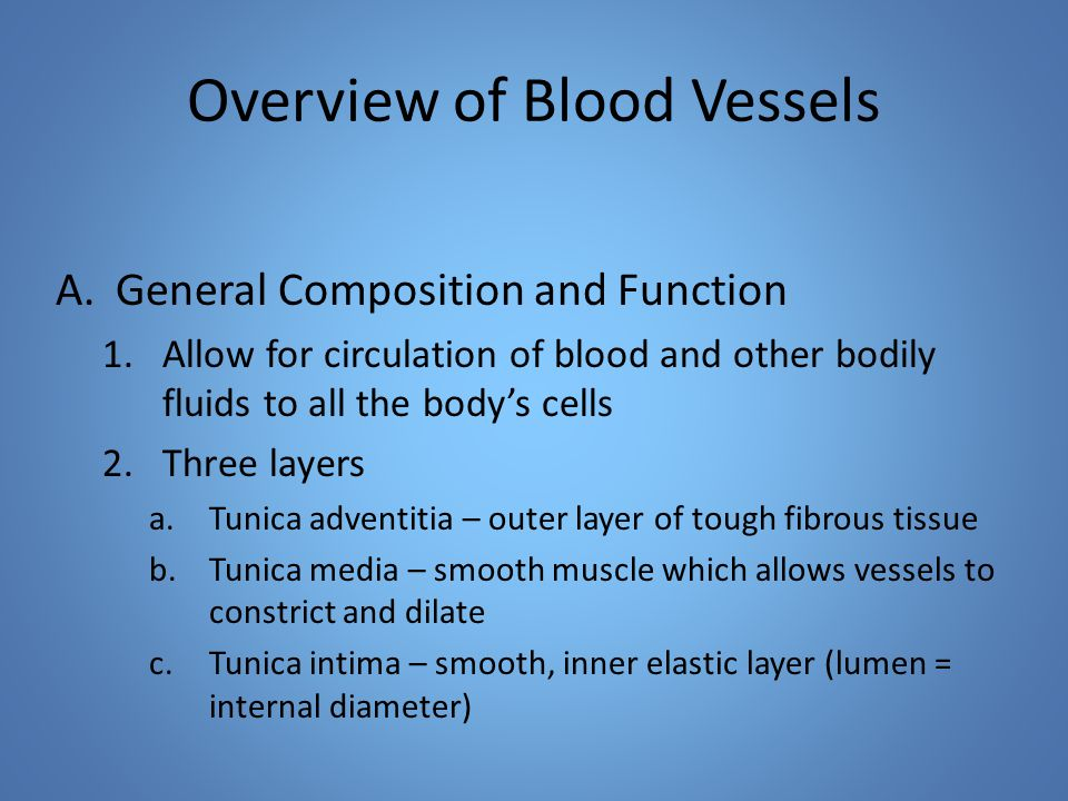 Overview of Blood Vessels A.General Composition and Function 1.Allow for circulation of blood and other bodily fluids to all the body's cells 2.Three