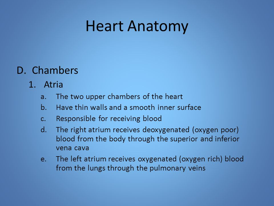 Heart Anatomy D.Chambers 1.Atria a.The two upper chambers of the heart b.Have thin walls and a smooth inner surface c.Responsible for receiving blood d.The right atrium receives deoxygenated (oxygen poor) blood from the body through the superior and inferior vena cava e.The left atrium receives oxygenated (oxygen rich) blood from the lungs through the pulmonary veins
