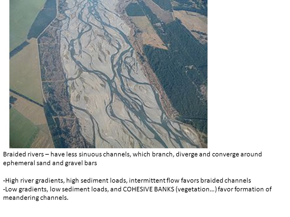Braided rivers – have less sinuous channels, which branch, diverge and converge around ephemeral sand and gravel bars -High river gradients, high sediment loads, intermittent flow favors braided channels -Low gradients, low sediment loads, and COHESIVE BANKS (vegetation…) favor formation of meandering channels.