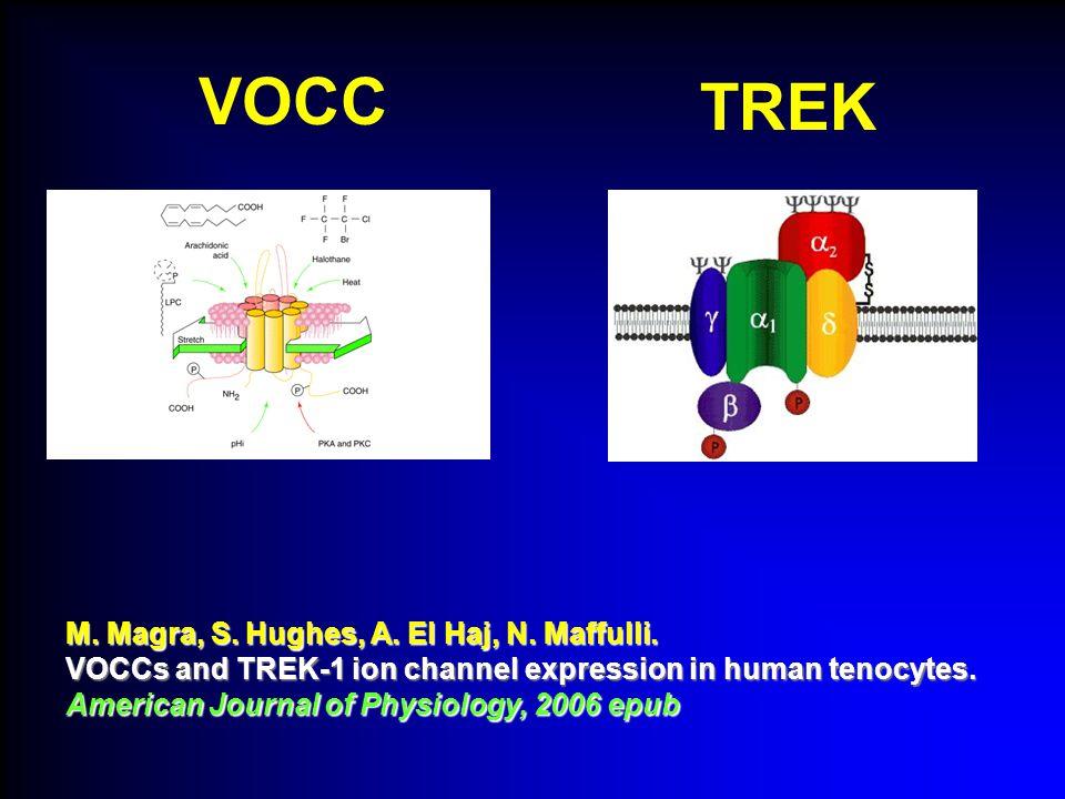 VOCC M. Magra, S. Hughes, A. El Haj, N. Maffulli. VOCCs and TREK-1 ion channel expression in human tenocytes. American Journal of Physiology, 2006 epu