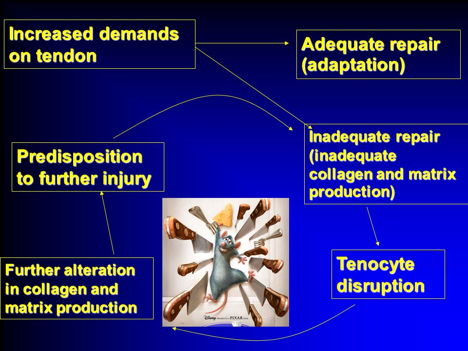 Adequate repair (adaptation)‏ Increased demands on tendon Predisposition to further injury Inadequate repair (inadequate collagen and matrix production)‏ Further alteration in collagen and matrix production Tenocyte disruption
