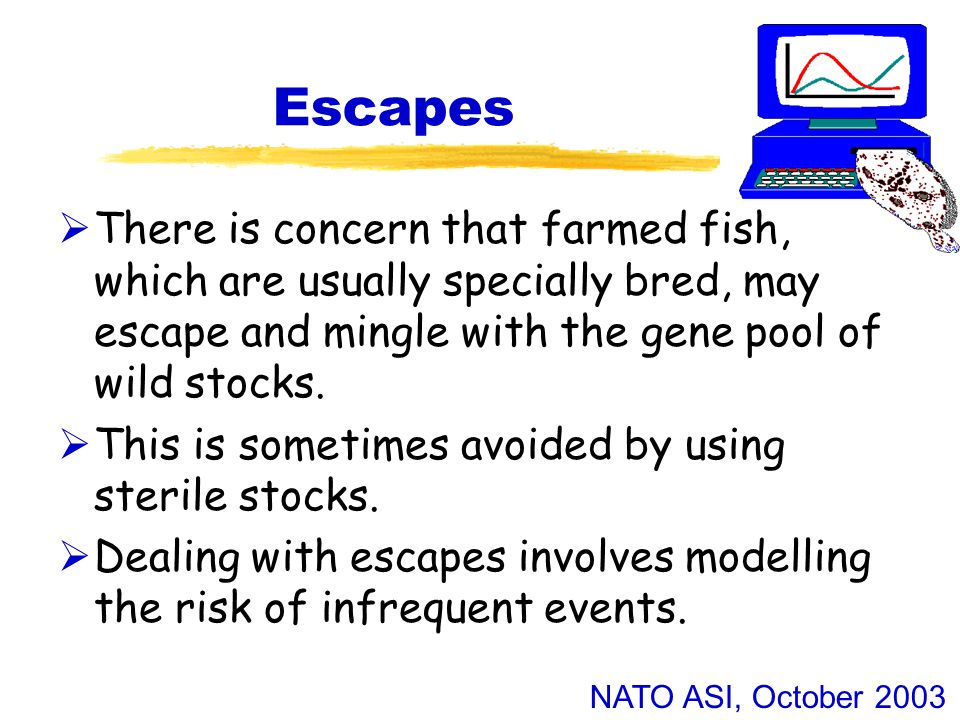 NATO ASI, October 2003 Escapes  There is concern that farmed fish, which are usually specially bred, may escape and mingle with the gene pool of wild