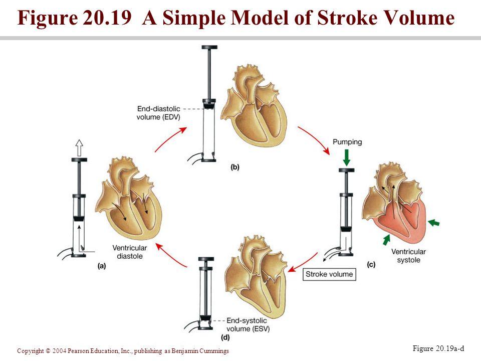 Copyright © 2004 Pearson Education, Inc., publishing as Benjamin Cummings Figure 20.19 A Simple Model of Stroke Volume Figure 20.19a-d