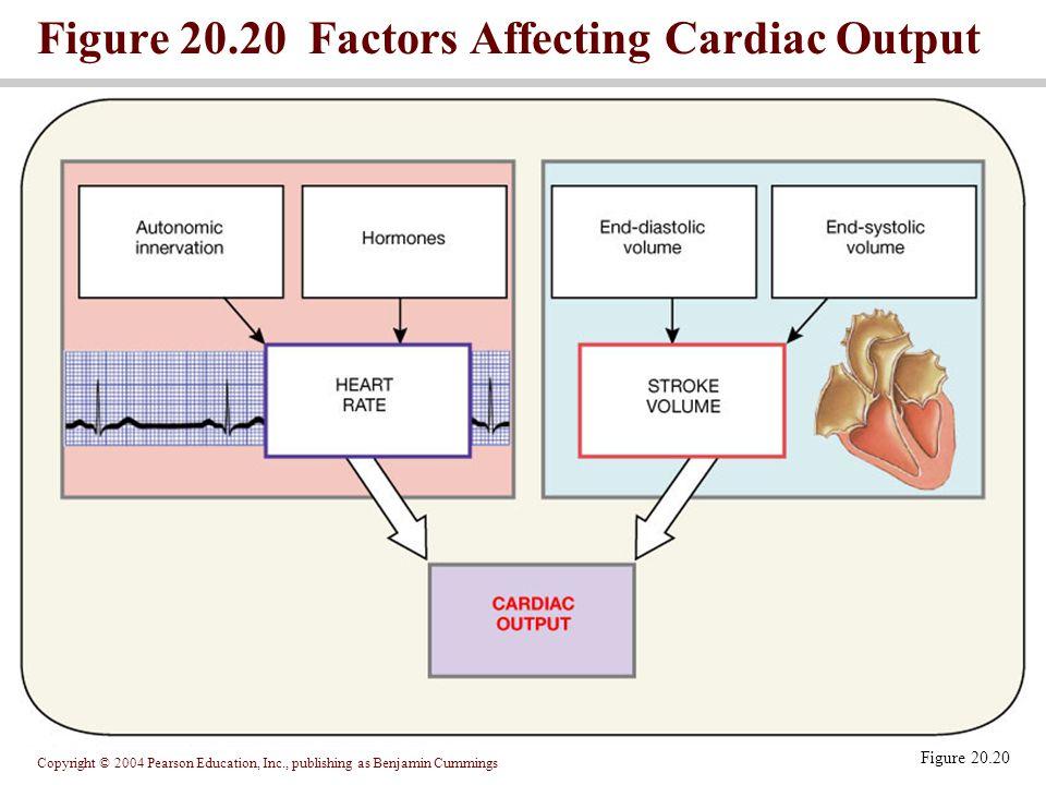 Copyright © 2004 Pearson Education, Inc., publishing as Benjamin Cummings Figure 20.20 Factors Affecting Cardiac Output Figure 20.20