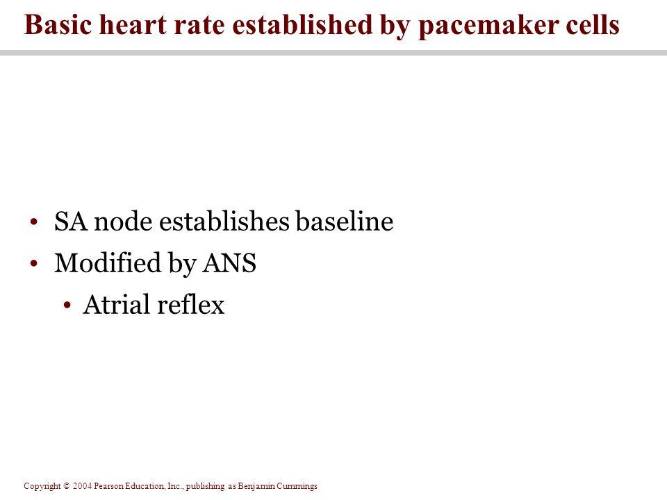 Copyright © 2004 Pearson Education, Inc., publishing as Benjamin Cummings SA node establishes baseline Modified by ANS Atrial reflex Basic heart rate