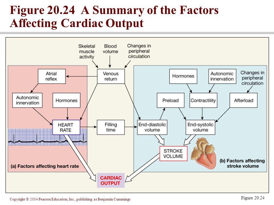 Copyright © 2004 Pearson Education, Inc., publishing as Benjamin Cummings Figure 20.24 A Summary of the Factors Affecting Cardiac Output Figure 20.24