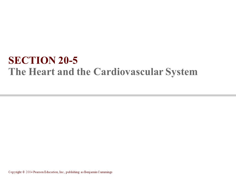 Copyright © 2004 Pearson Education, Inc., publishing as Benjamin Cummings SECTION 20-5 The Heart and the Cardiovascular System