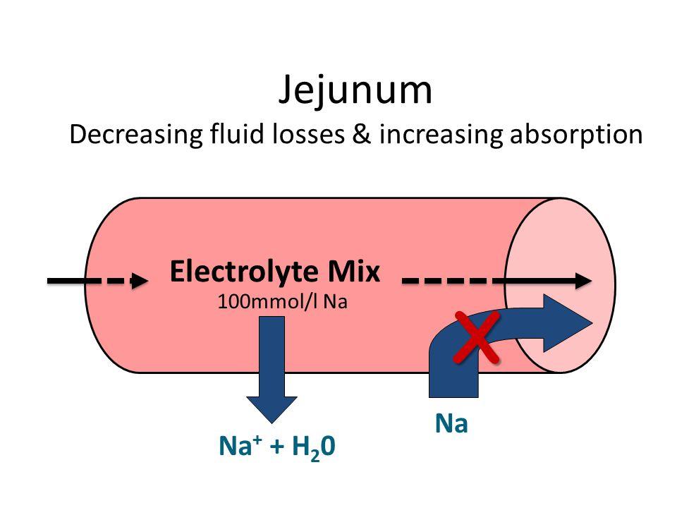 Jejunum Decreasing fluid losses & increasing absorption Electrolyte Mix NaX Na + + H 2 0 100mmol/l Na