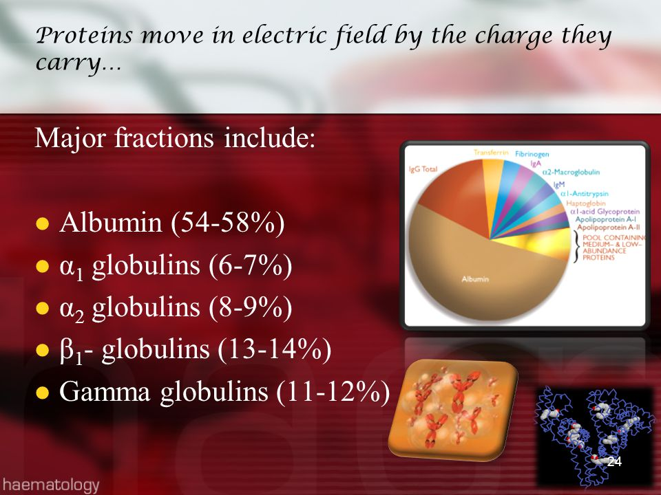 Proteins move in electric field by the charge they carry… Major fractions include: Albumin (54-58%) α 1 globulins (6-7%) α 2 globulins (8-9%) β 1 - gl