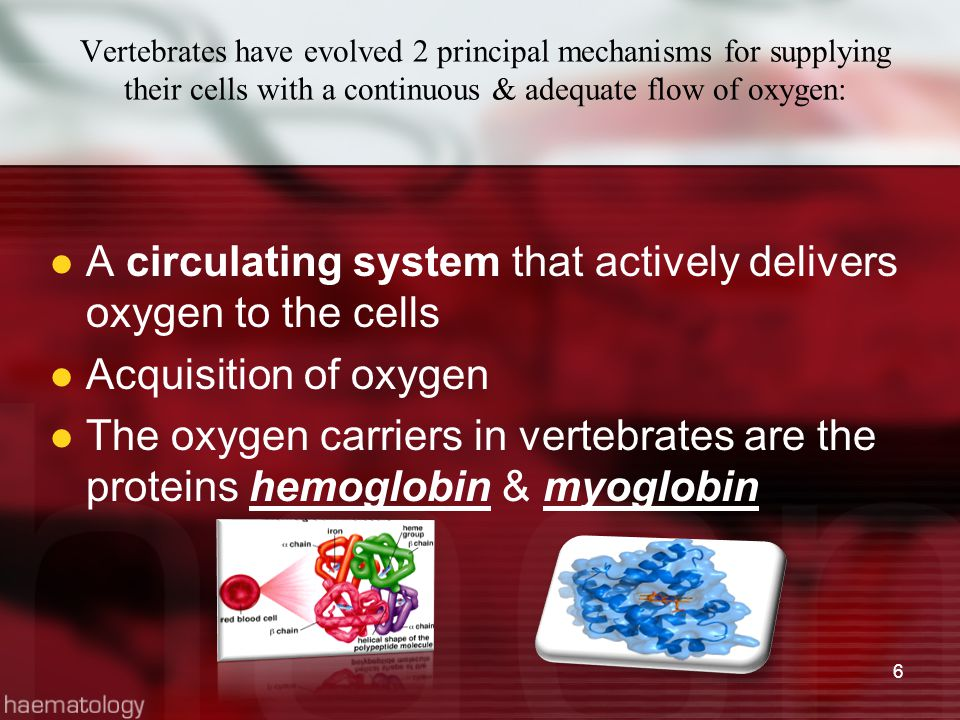 Vertebrates have evolved 2 principal mechanisms for supplying their cells with a continuous & adequate flow of oxygen: A circulating system that activ