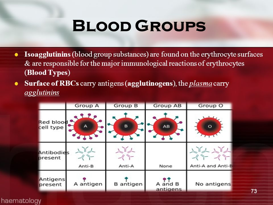 Blood Groups Isoagglutinins (blood group substances) are found on the erythrocyte surfaces & are responsible for the major immunological reactions of