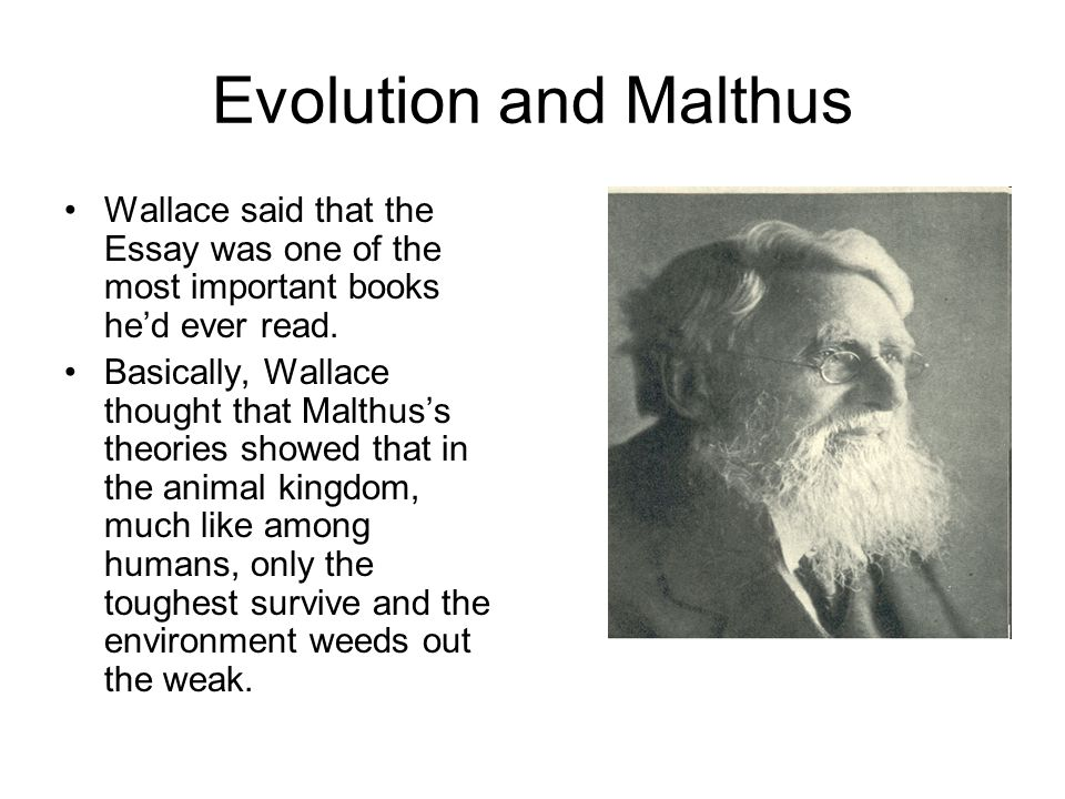 Evolution and Malthus Wallace said that the Essay was one of the most important books he'd ever read.