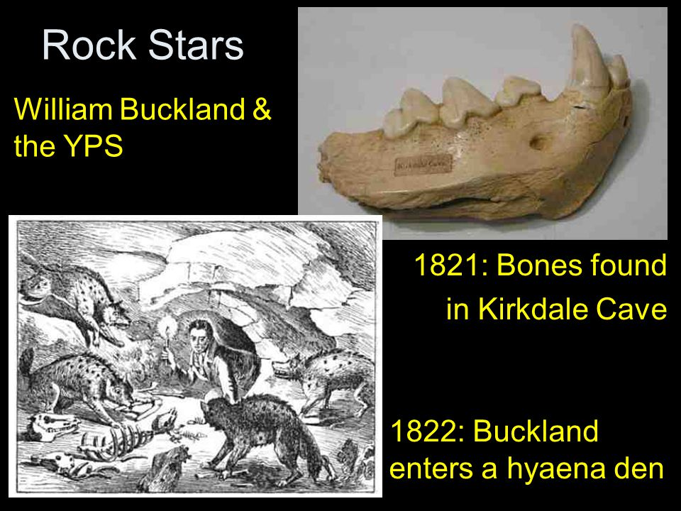 Rock Stars 1821: Bones found in Kirkdale Cave 1822: Buckland enters a hyaena den William Buckland & the YPS