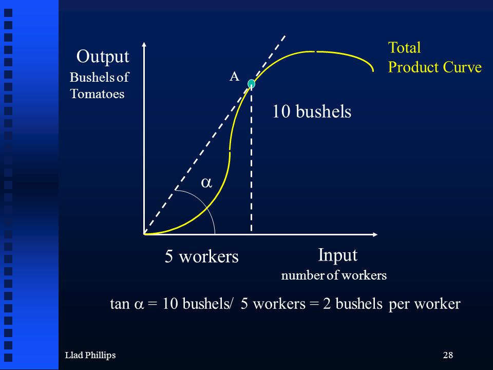Llad Phillips28 Output Input Bushels of Tomatoes number of workers A 10 bushels 5 workers  tan  = 10 bushels/ 5 workers = 2 bushels per worker Total Product Curve
