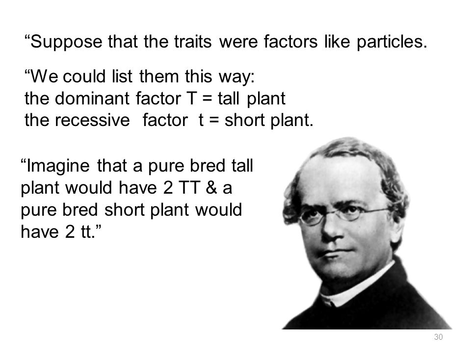 Imagine that a pure bred tall plant would have 2 TT & a pure bred short plant would have 2 tt. 30 Suppose that the traits were factors like particles.