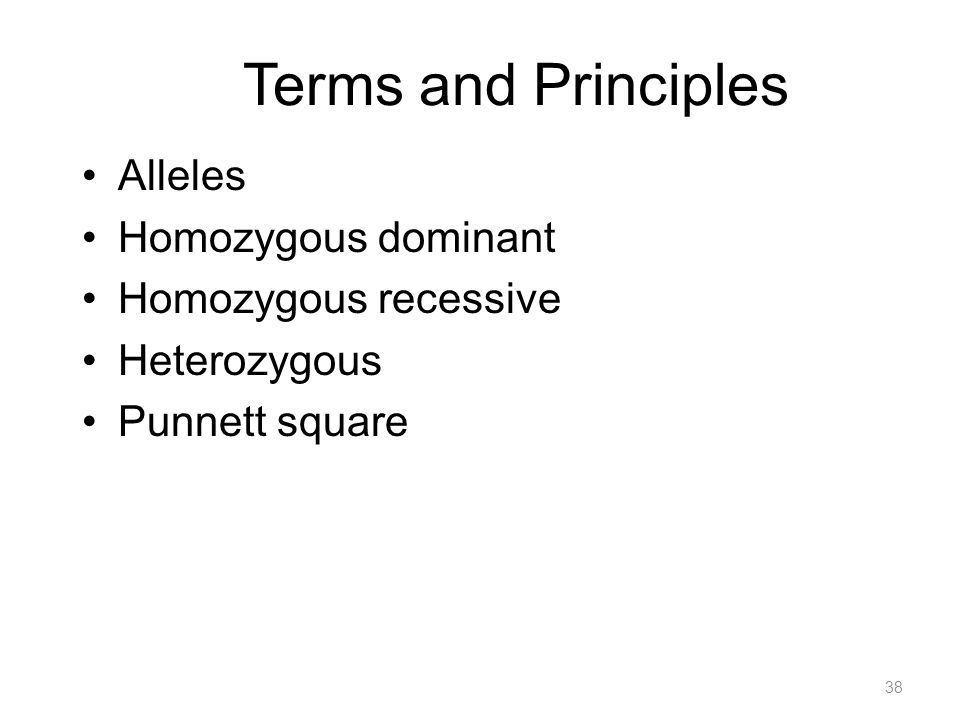 Terms and Principles Alleles Homozygous dominant Homozygous recessive Heterozygous Punnett square 38