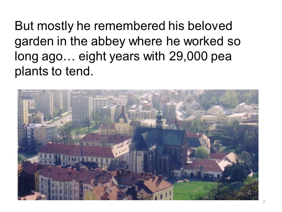 But mostly he remembered his beloved garden in the abbey where he worked so long ago… eight years with 29,000 pea plants to tend.