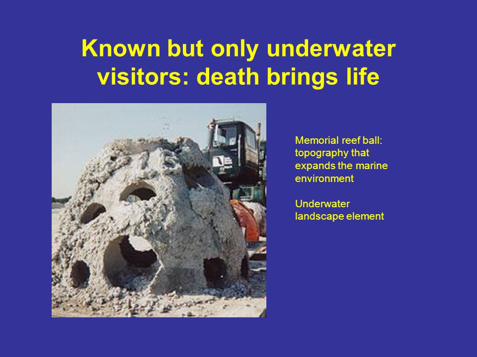 Known but only underwater visitors: death brings life Memorial reef ball: topography that expands the marine environment Underwater landscape element