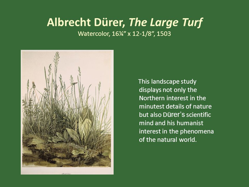 Albrecht Dürer, The Large Turf Watercolor, 16¼ x 12-1/8 , 1503 This landscape study displays not only the Northern interest in the minutest details of nature but also D ürer's scientific mind and his humanist interest in the phenomena of the natural world.