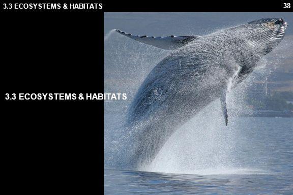38 3.3 ECOSYSTEMS & HABITATS