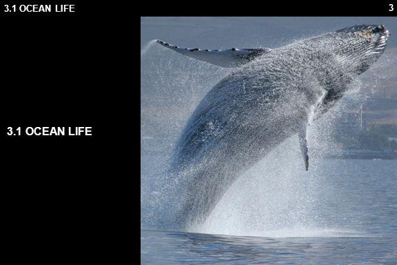 3 3.1 OCEAN LIFE