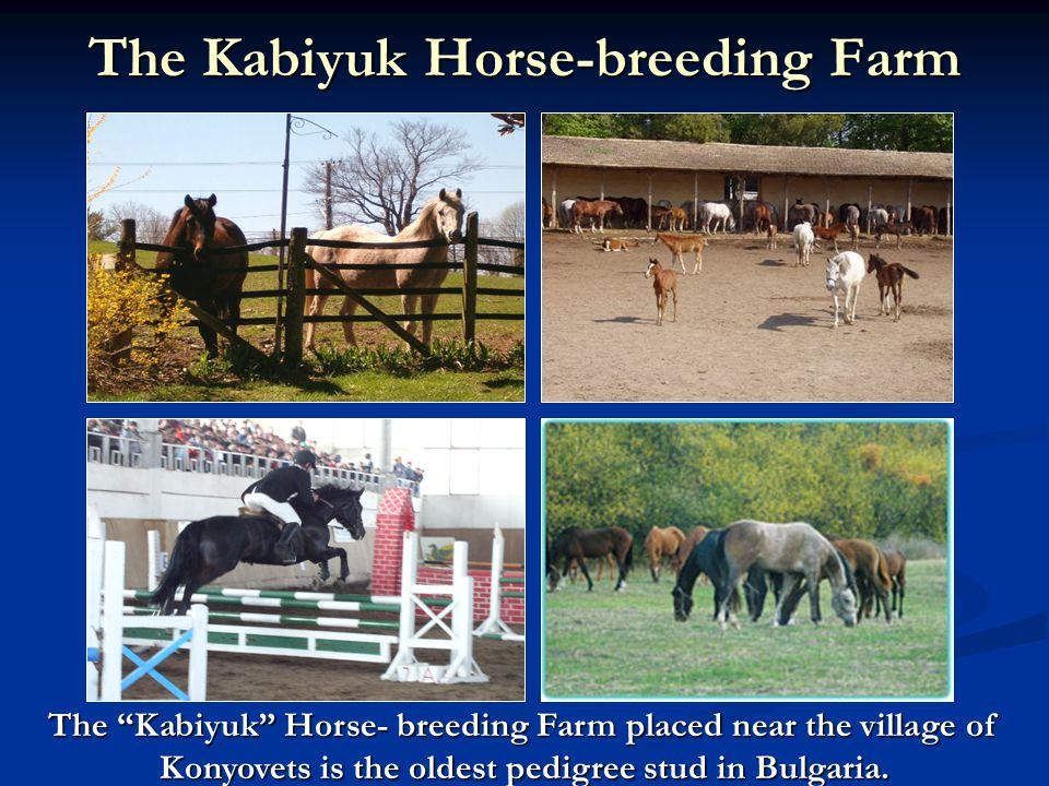 The Kabiyuk Horse-breeding Farm The Kabiyuk Horse- breeding Farm placed near the village of Konyovets is the oldest pedigree stud in Bulgaria.