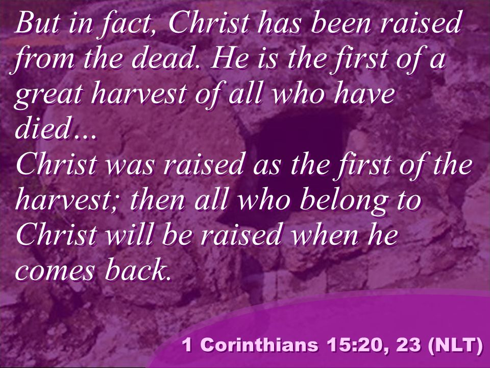 But in fact, Christ has been raised from the dead.