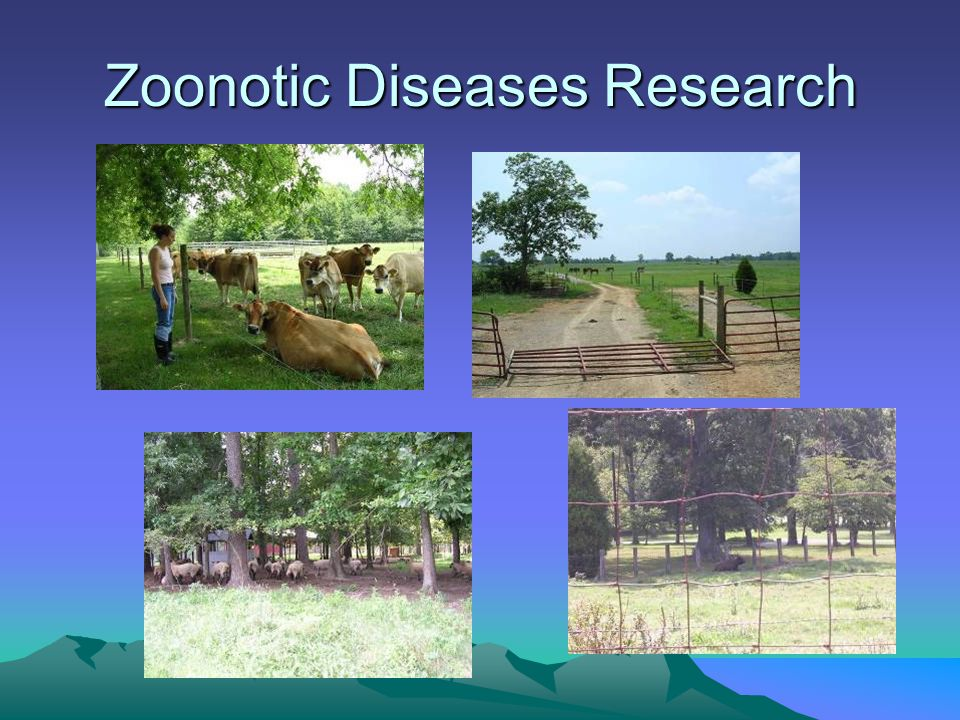 Zoonotic Diseases Research