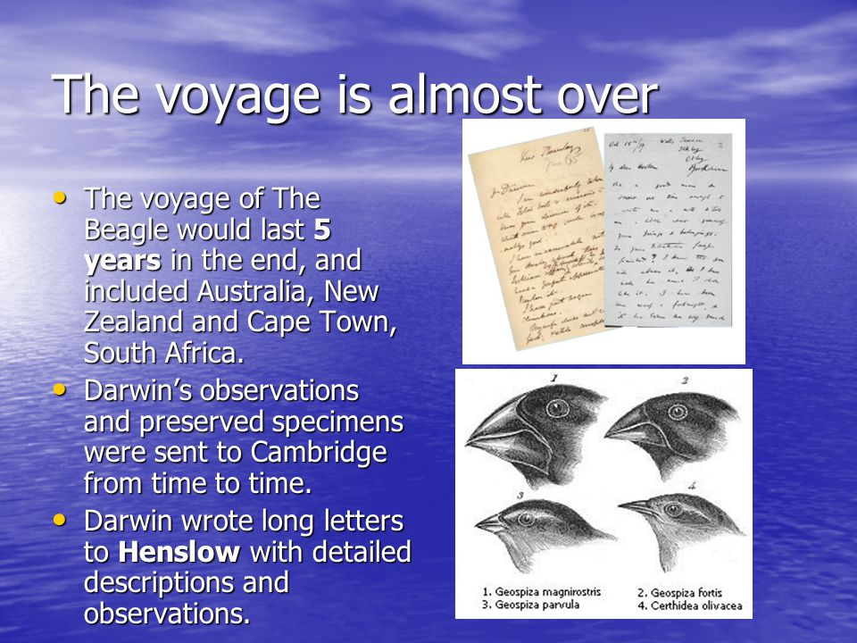 The voyage is almost over The voyage of The Beagle would last 5 years in the end, and included Australia, New Zealand and Cape Town, South Africa.