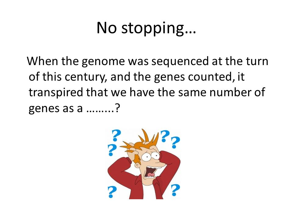 No stopping… When the genome was sequenced at the turn of this century, and the genes counted, it transpired that we have the same number of genes as a ……...