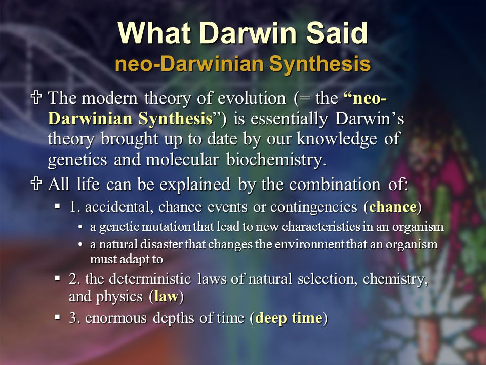 What Darwin Said neo-Darwinian Synthesis  The modern theory of evolution (= the neo- Darwinian Synthesis ) is essentially Darwin's theory brought up to date by our knowledge of genetics and molecular biochemistry.