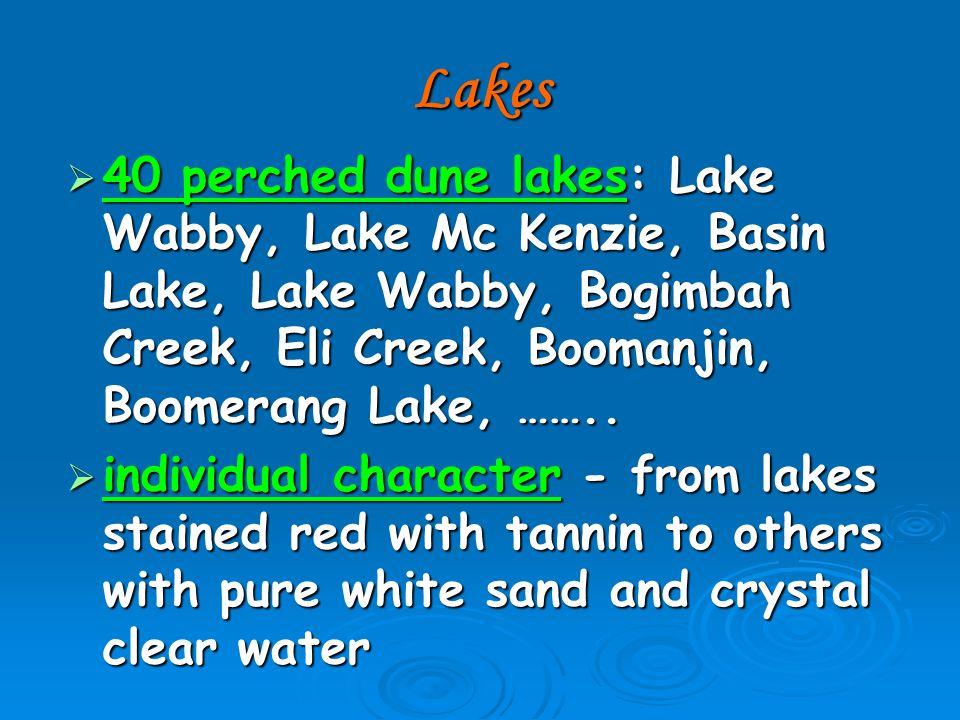 Lakes  40 perched dune lakes: Lake Wabby, Lake Mc Kenzie, Basin Lake, Lake Wabby, Bogimbah Creek, Eli Creek, Boomanjin, Boomerang Lake, ……..