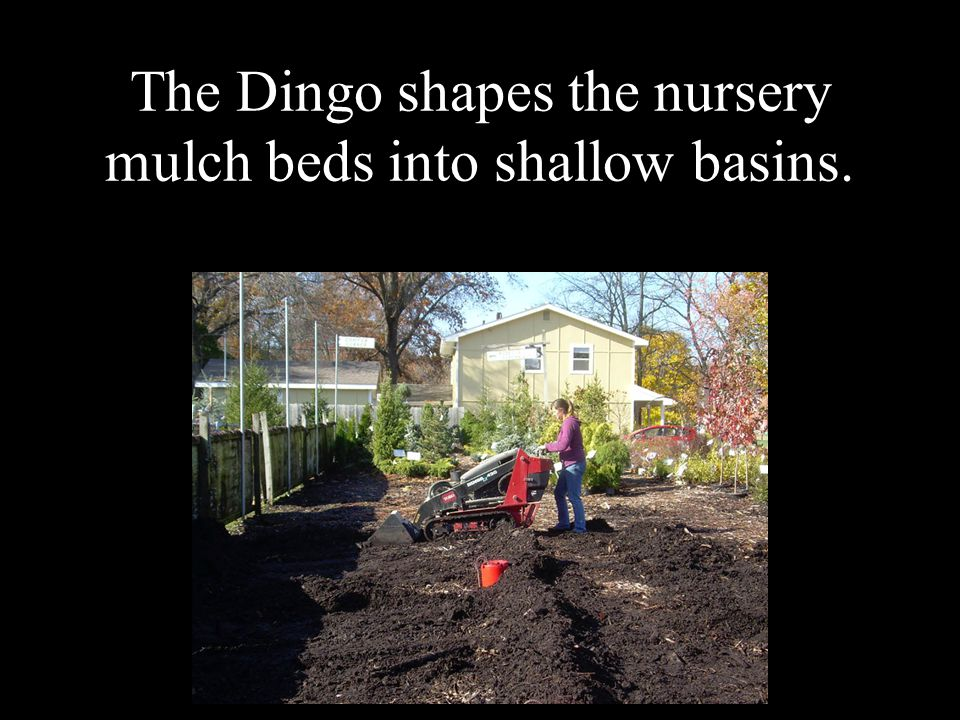The Dingo shapes the nursery mulch beds into shallow basins.