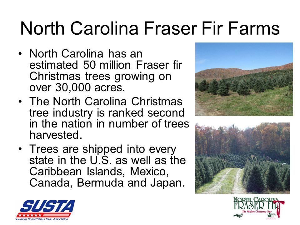North Carolina Fraser Fir Farms North Carolina has an estimated 50 million Fraser fir Christmas trees growing on over 30,000 acres.