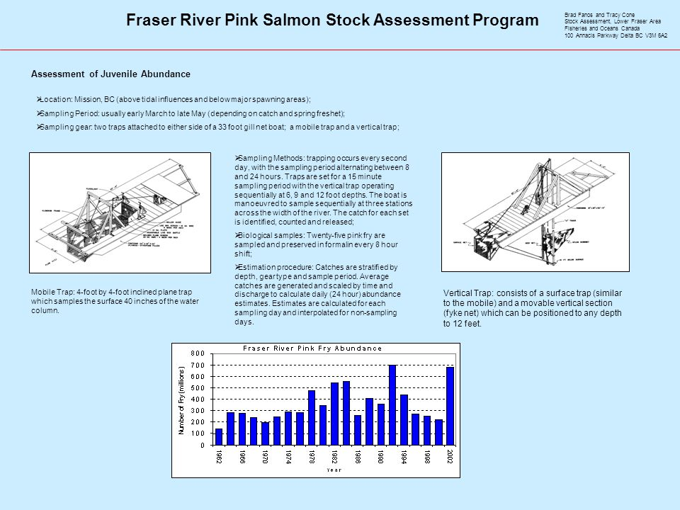 Fraser River Pink Salmon Stock Assessment Program Assessment of Juvenile Abundance  Location: Mission, BC (above tidal influences and below major spawning areas);  Sampling Period: usually early March to late May (depending on catch and spring freshet);  Sampling gear: two traps attached to either side of a 33 foot gill net boat; a mobile trap and a vertical trap; Mobile Trap: 4-foot by 4-foot inclined plane trap which samples the surface 40 inches of the water column.