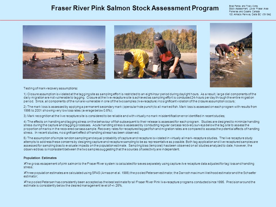Fraser River Pink Salmon Stock Assessment Program Testing of mark-recovery assumptions: 1) Closure assumption is violated at the tagging site as sampling effort is restricted to an eight-hour period during daylight hours.