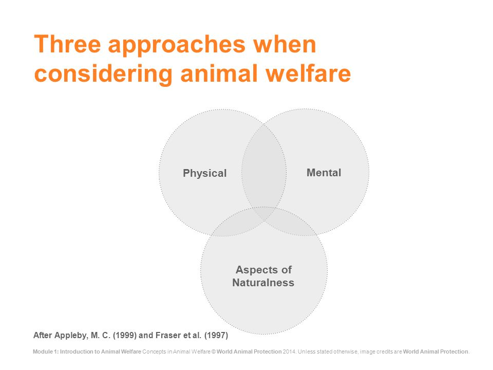 Module 1: Introduction to Animal Welfare Concepts in Animal Welfare © World Animal Protection 2014.