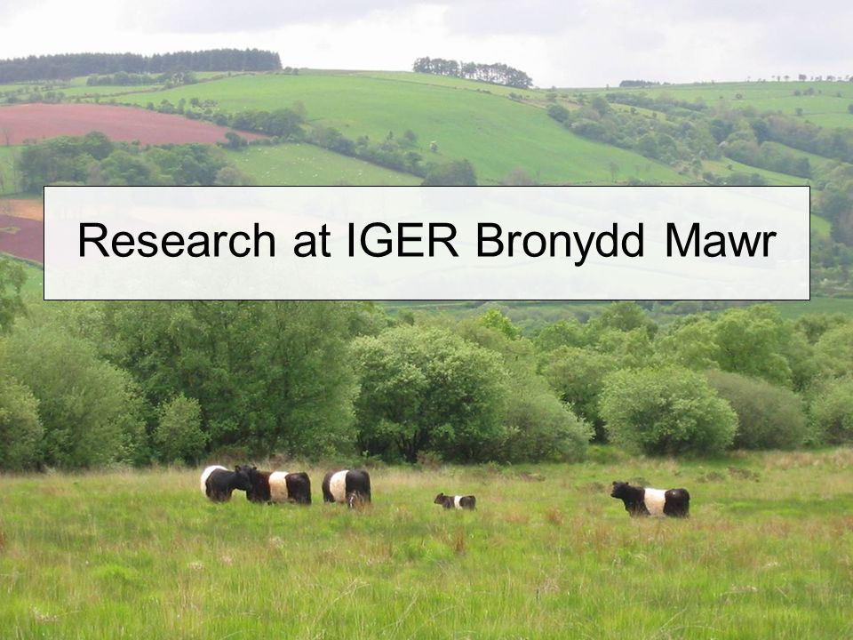 Research at IGER Bronydd Mawr