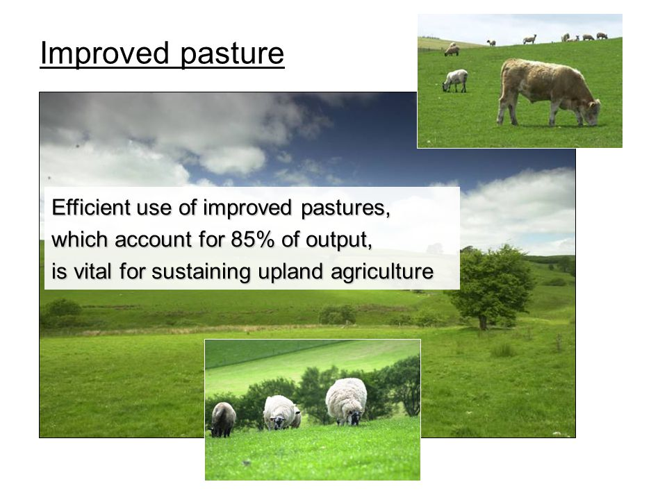 Improved pasture Efficient use of improved pastures, which account for 85% of output, is vital for sustaining upland agriculture