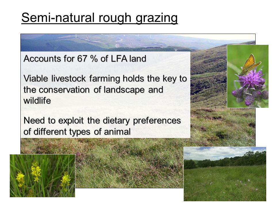 Semi-natural rough grazing Accounts for 67 % of LFA land Viable livestock farming holds the key to the conservation of landscape and wildlife Need to exploit the dietary preferences of different types of animal