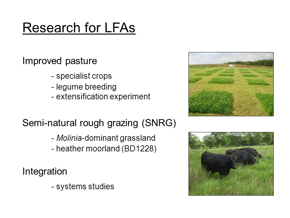 Research for LFAs Improved pasture - specialist crops - legume breeding - extensification experiment Semi-natural rough grazing (SNRG) - Molinia-domin