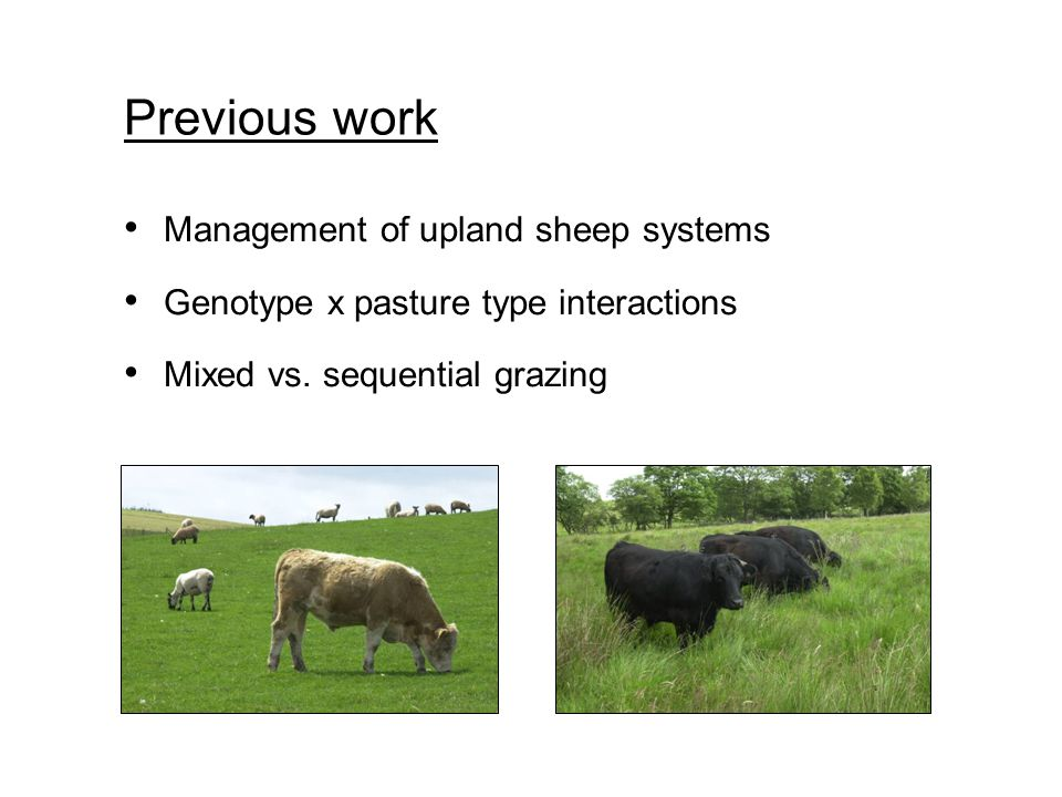 Management of upland sheep systems Genotype x pasture type interactions Mixed vs. sequential grazing Previous work