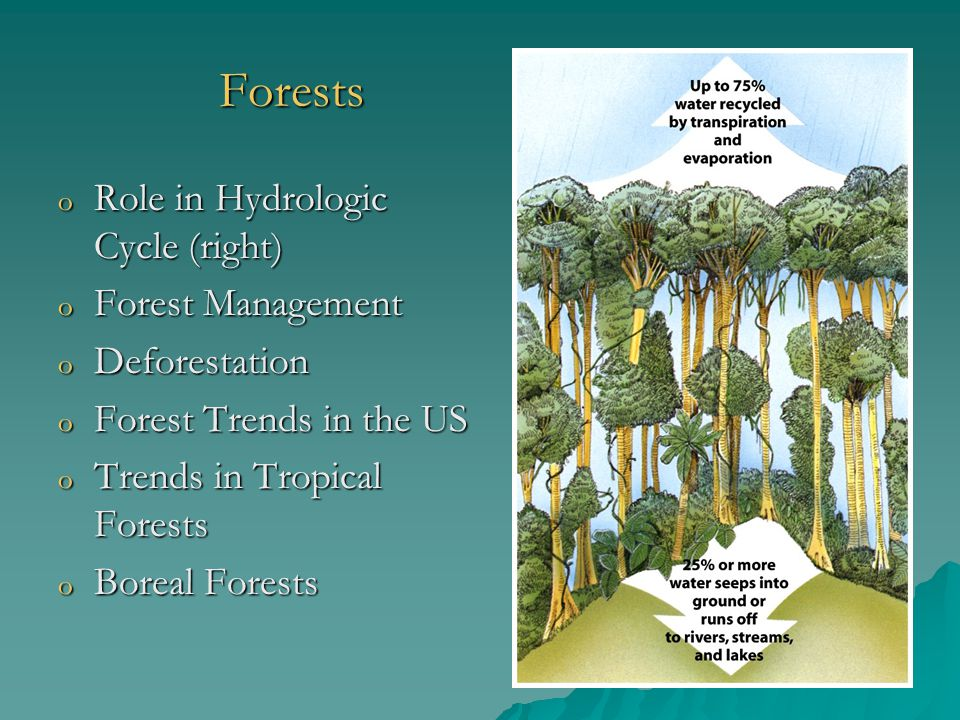 Forests o Role in Hydrologic Cycle (right) o Forest Management o Deforestation o Forest Trends in the US o Trends in Tropical Forests o Boreal Forests