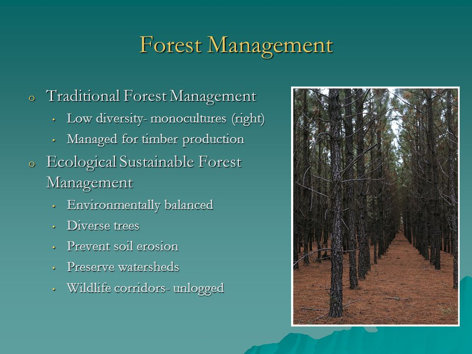 Forest Management o Traditional Forest Management Low diversity- monocultures (right) Low diversity- monocultures (right) Managed for timber production Managed for timber production o Ecological Sustainable Forest Management Environmentally balanced Environmentally balanced Diverse trees Diverse trees Prevent soil erosion Prevent soil erosion Preserve watersheds Preserve watersheds Wildlife corridors- unlogged Wildlife corridors- unlogged