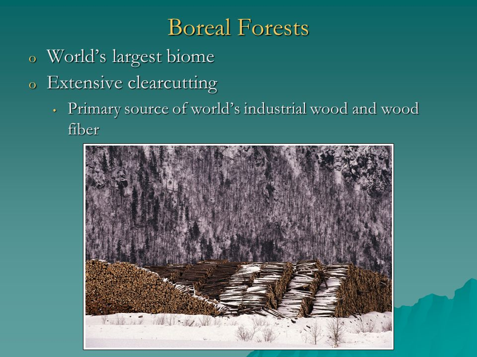 Boreal Forests o World's largest biome o Extensive clearcutting Primary source of world's industrial wood and wood fiber Primary source of world's industrial wood and wood fiber