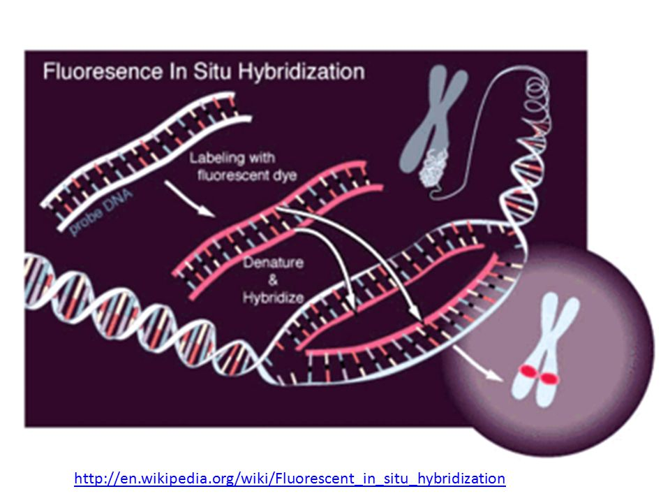 http://en.wikipedia.org/wiki/Fluorescent_in_situ_hybridization